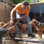 Update : Kasus Penyelundupan Anjing Di Kulonprogo Untuk Di Konsumsi Segera Disidang